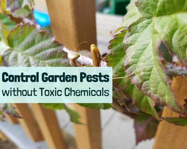 Control Garden Pests Without Toxic Chemicals