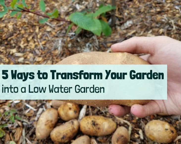 Transform Your Garden Into a Low Water Garden