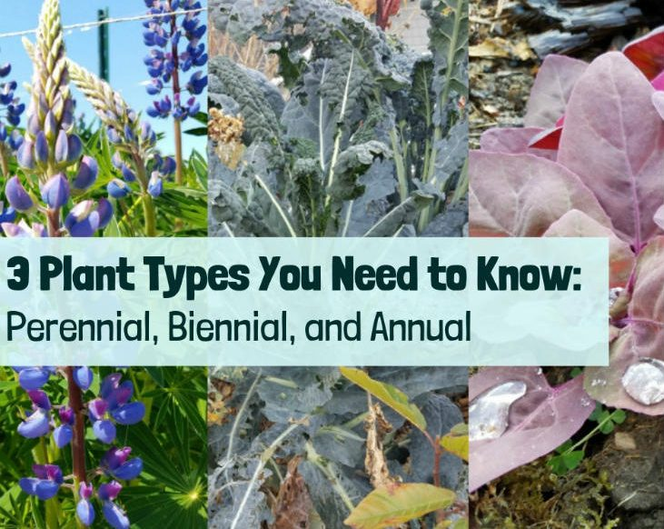 3 Plant Types You Need To Know Perennial Biennial And Annual