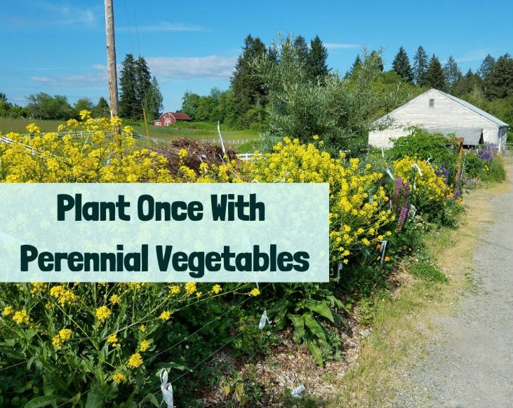 Plant Once With Perennial Vegetables
