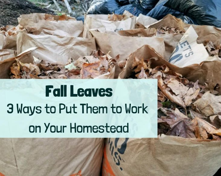 Fall Leaves - 3 Ways to Put Them to Work on Your Homestead