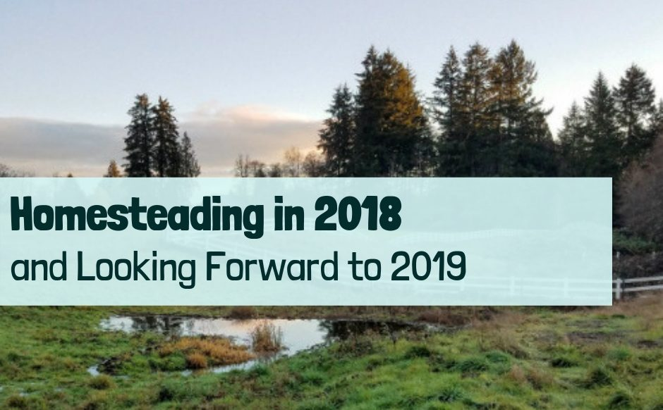 Looking back at 2018 and forward to 2019
