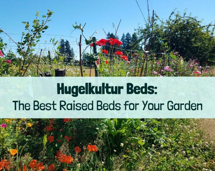 Hugelkultur beds are wood with soil on top
