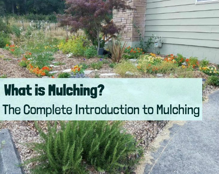 Complete guide to mulching