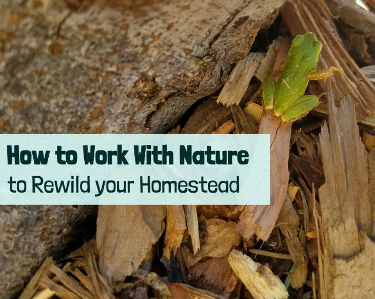 Work With Nature to Rewild Your Homestead
