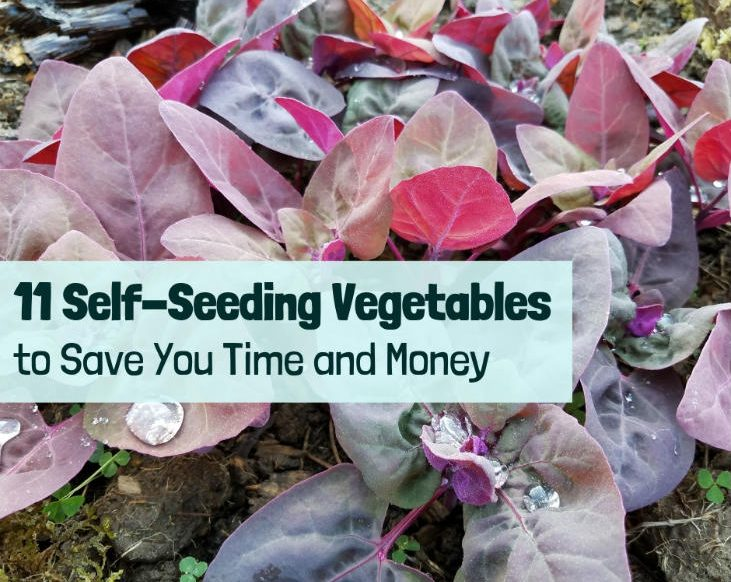 Self-Seeding Vegetables for Your Garden