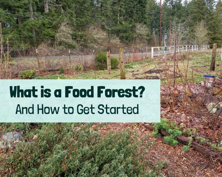 Start a food forest today