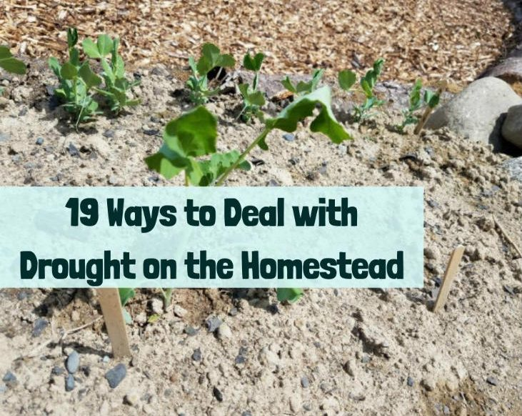 Dealing with drought on the homestead