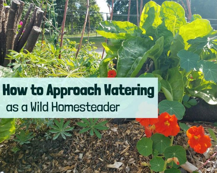 Approach watering as a wild homesteader