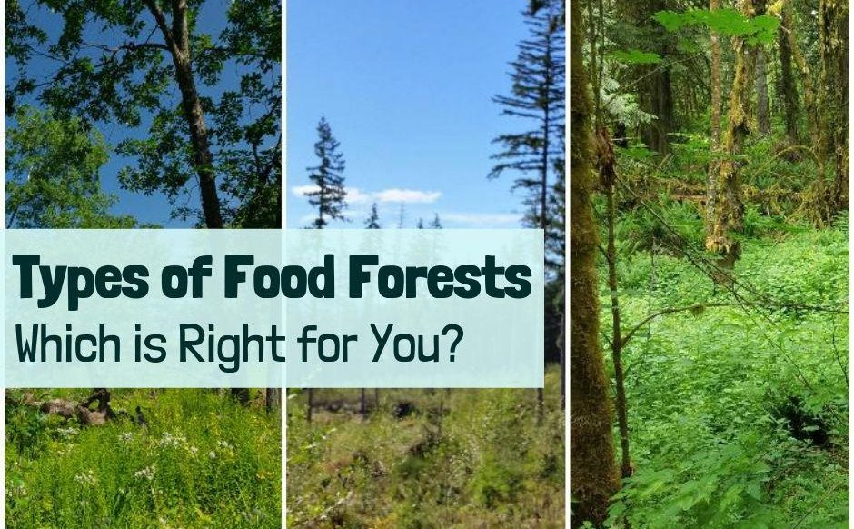 Types of food forests