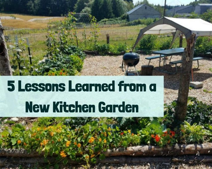 Lessons learned from a new kitchen garden