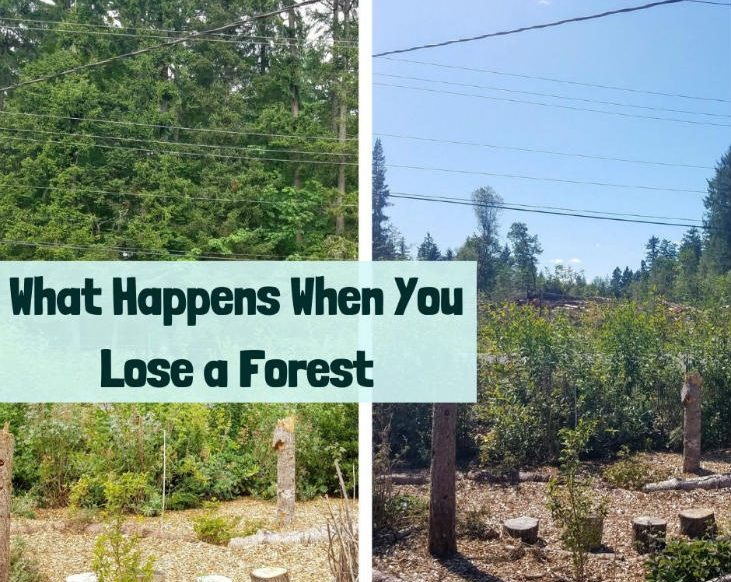 losing a forest