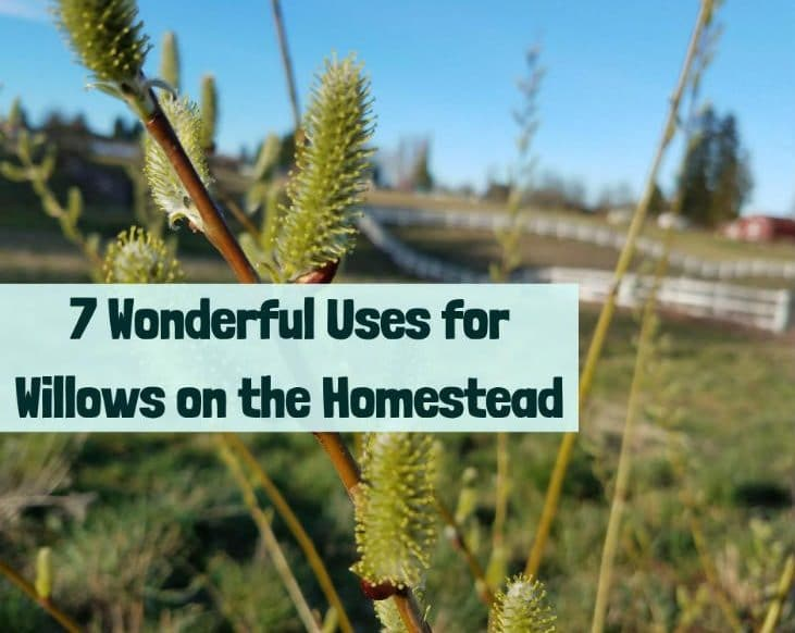 Use willows on your homestead
