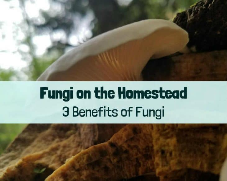 benefits of fungi