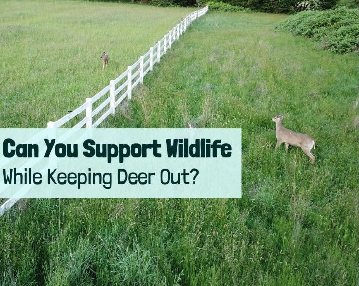 keeping deer out
