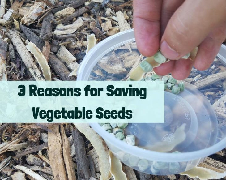 Save your vegetable seeds