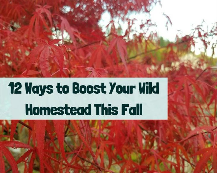 Fall is the time to boost your wild homestead