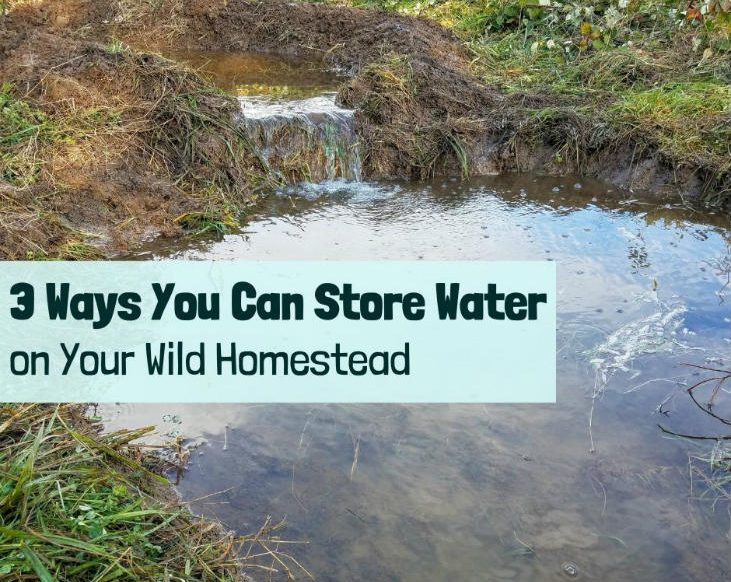 Store water on your wild homestead