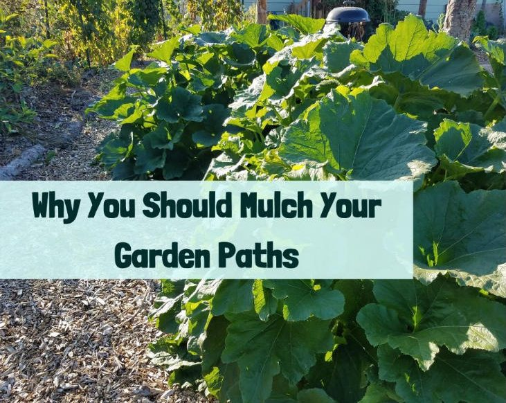 Mulch your garden paths