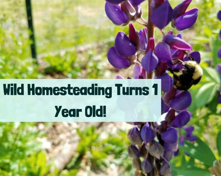 1 Year of Wild Homesteading