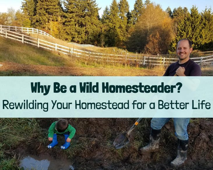 A family rewilding their homestead