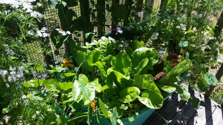 Choosing the right vegetables to plant helps small or large gardens be more productive