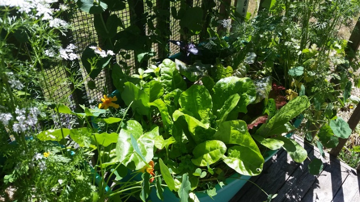 Annual plants are the core of a vegetable garden