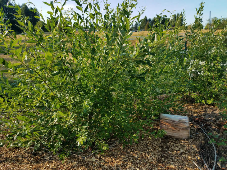 Use willows for chop-and-drop