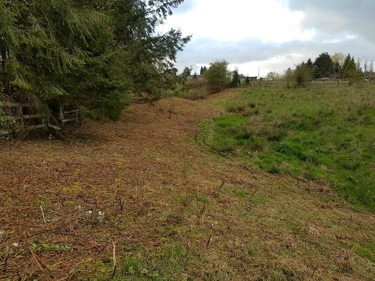 Preparing land for planting by removing blackberries