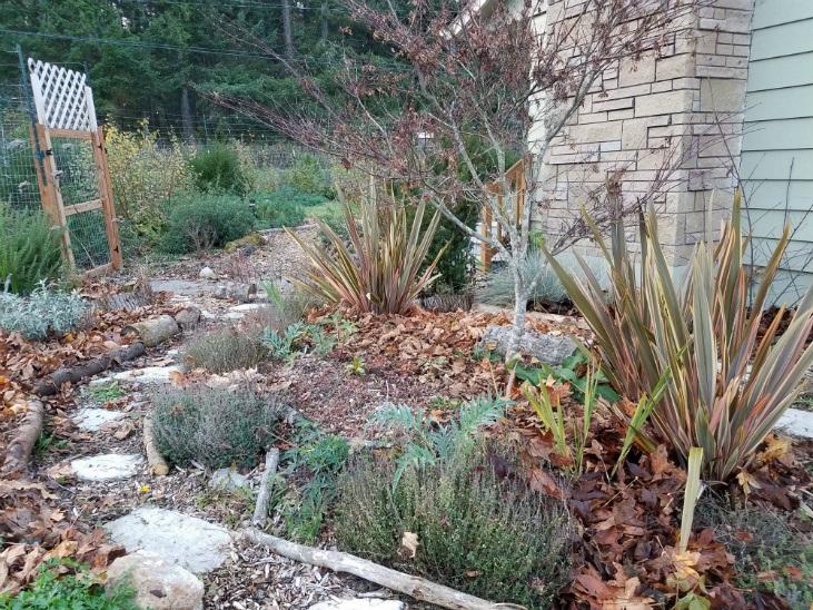 Fall leaves as mulch