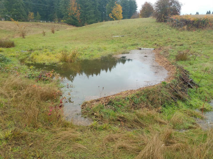 Store water on your wild homestead in permeable ponds