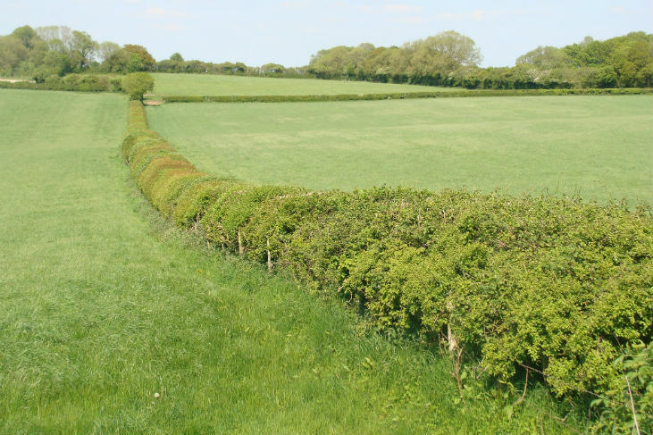 Hedgerows make great fences