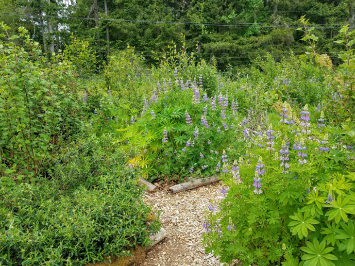Spread out your work by planting perennials in the fall