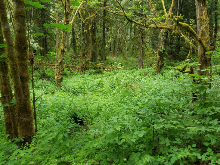 Mature forest type of food forest