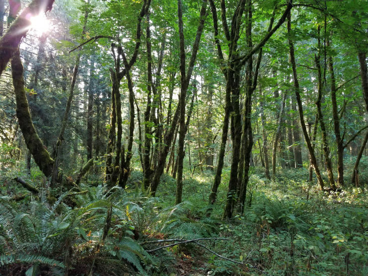 Food forests are designed to mimic a natural forest