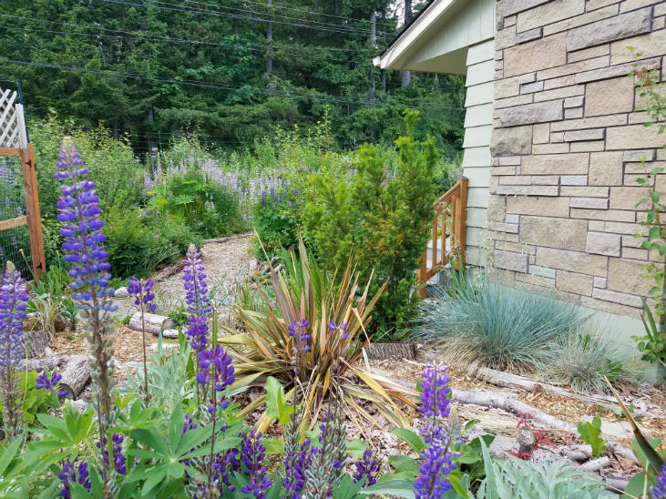 A nature trail can be part of rewilding your homestead.
