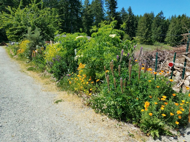 Hedgerows can help you deal with drought on the homestead