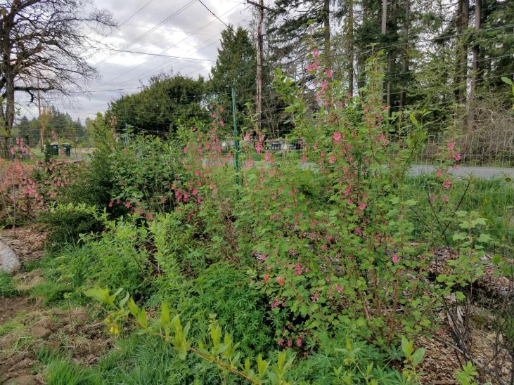 Plant a hedgerow