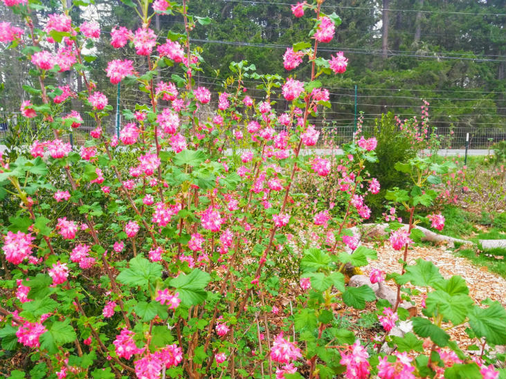 Native plants are an important part of rewilding your homestead.