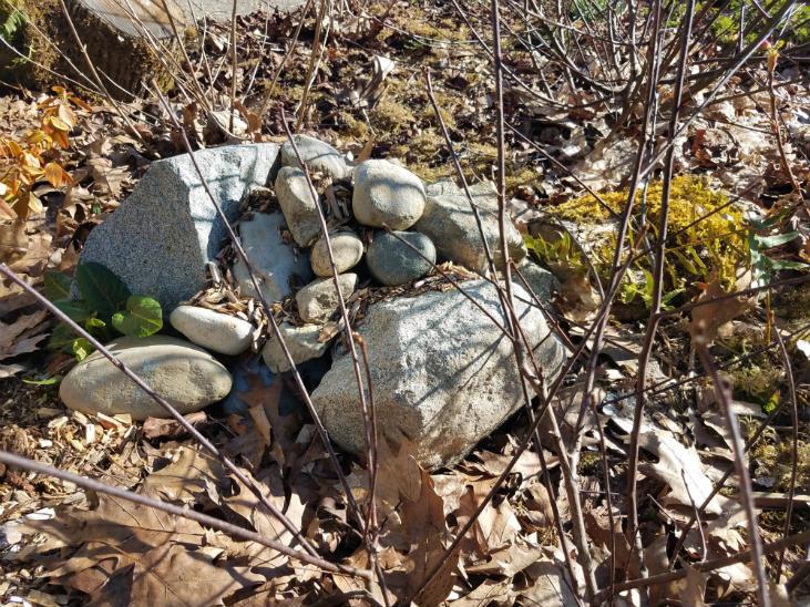 habitat features help to rewild your homestead