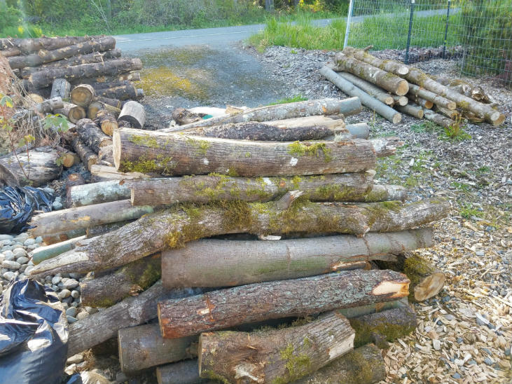 Use woody debris