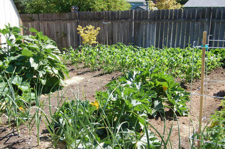 Direct seeding your vegetables or transplanting vegetable starts are 2 useful methods of planting