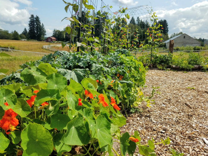 Use flowers to get started with polyculture in your garden