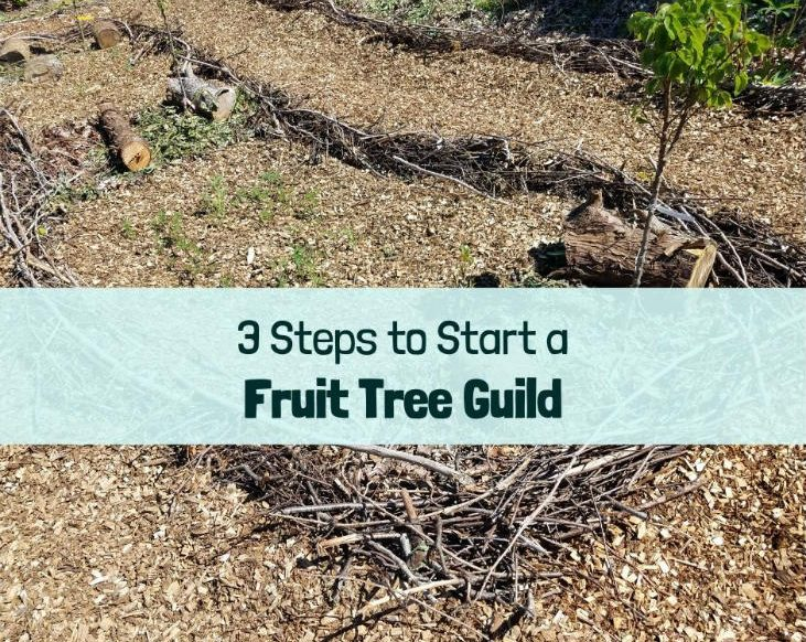 Start a fruit tree guild