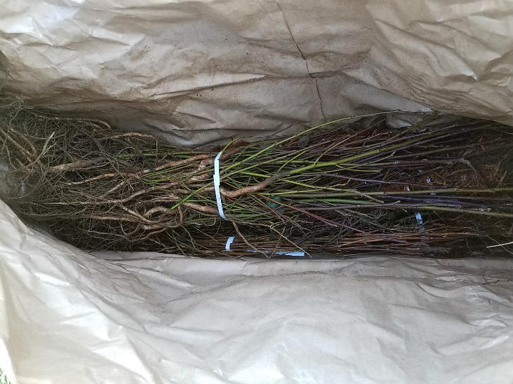 Wholesale bareroot plants and plugs are a cheap source of plants