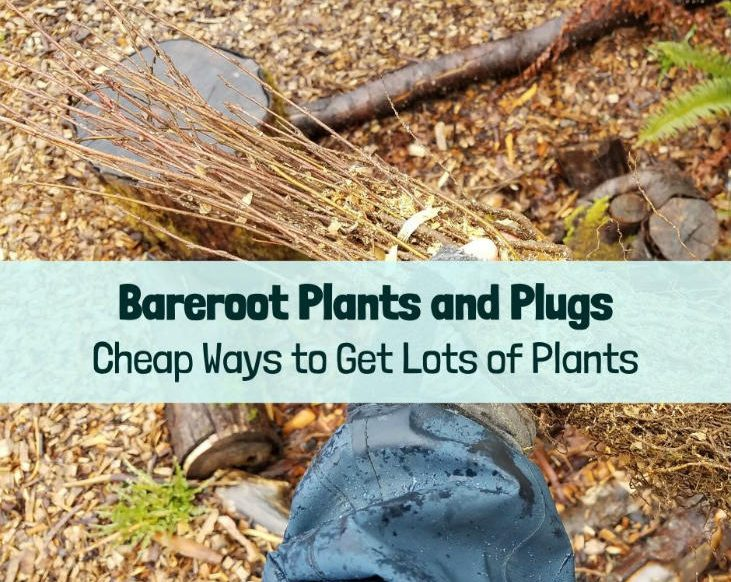 Get started with bareroot plants and plugs