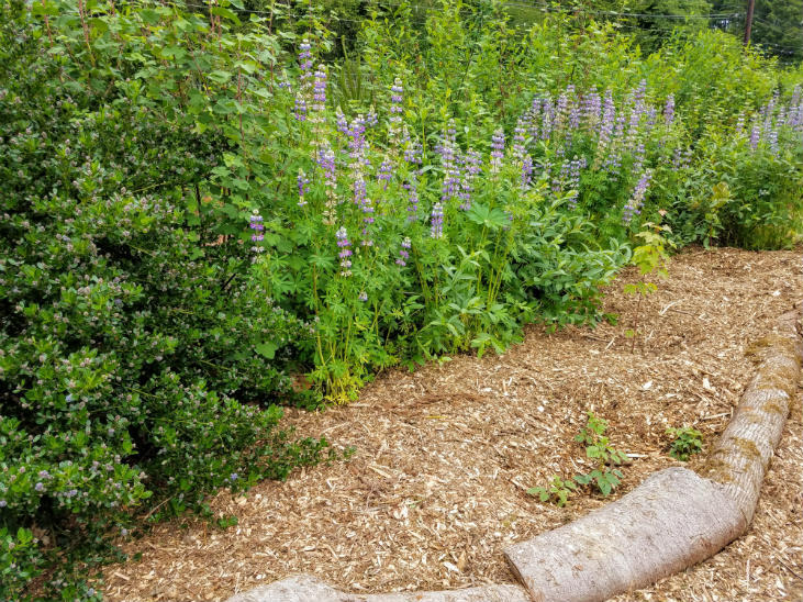 Nitrogen fixing plants boost existing plants