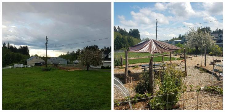 Transforming a lawn into a garden and more