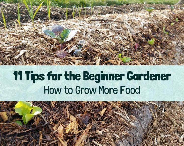 Grow more food as a beginner gardener