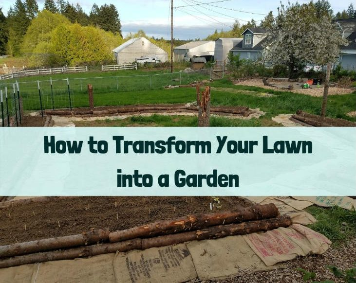 Transform your lawn into a garden